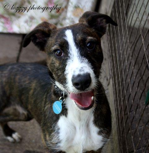 York Rspca Animal Home Albert Dog Adoption Animals Dogs