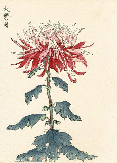 Keika Hasegawa Chrysanthemum Wood Block Prints 1st Edition 1893 Japanese Woodblock Printing Japanese Art Art