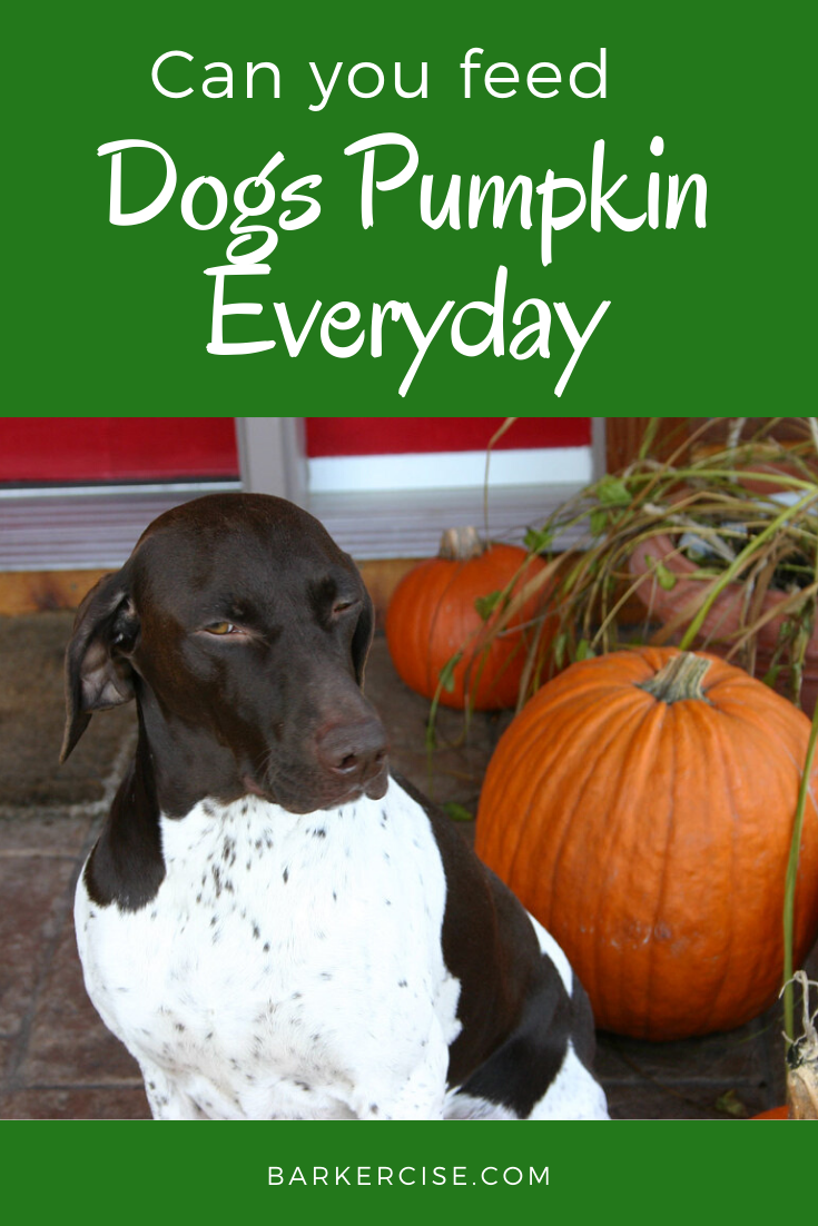 why feed dogs pumpkin