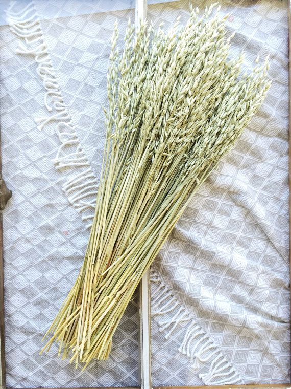 Aveena Oats Green Grains Dry Wheat Wedding Preserved Rhpinterest: Dried Grasses Home Decor At Home Improvement Advice