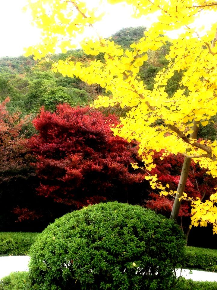 Japanese Autumn〜(^ ^)