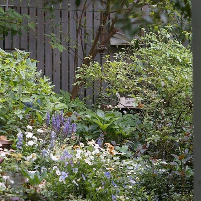 綺麗な頃の夏花壇、今は伸び伸びになってしまってるけど(/o\)#ミモザガーデン#mimosagarden #ナチュラルガーデン#洋裁教室##1日洋裁教室