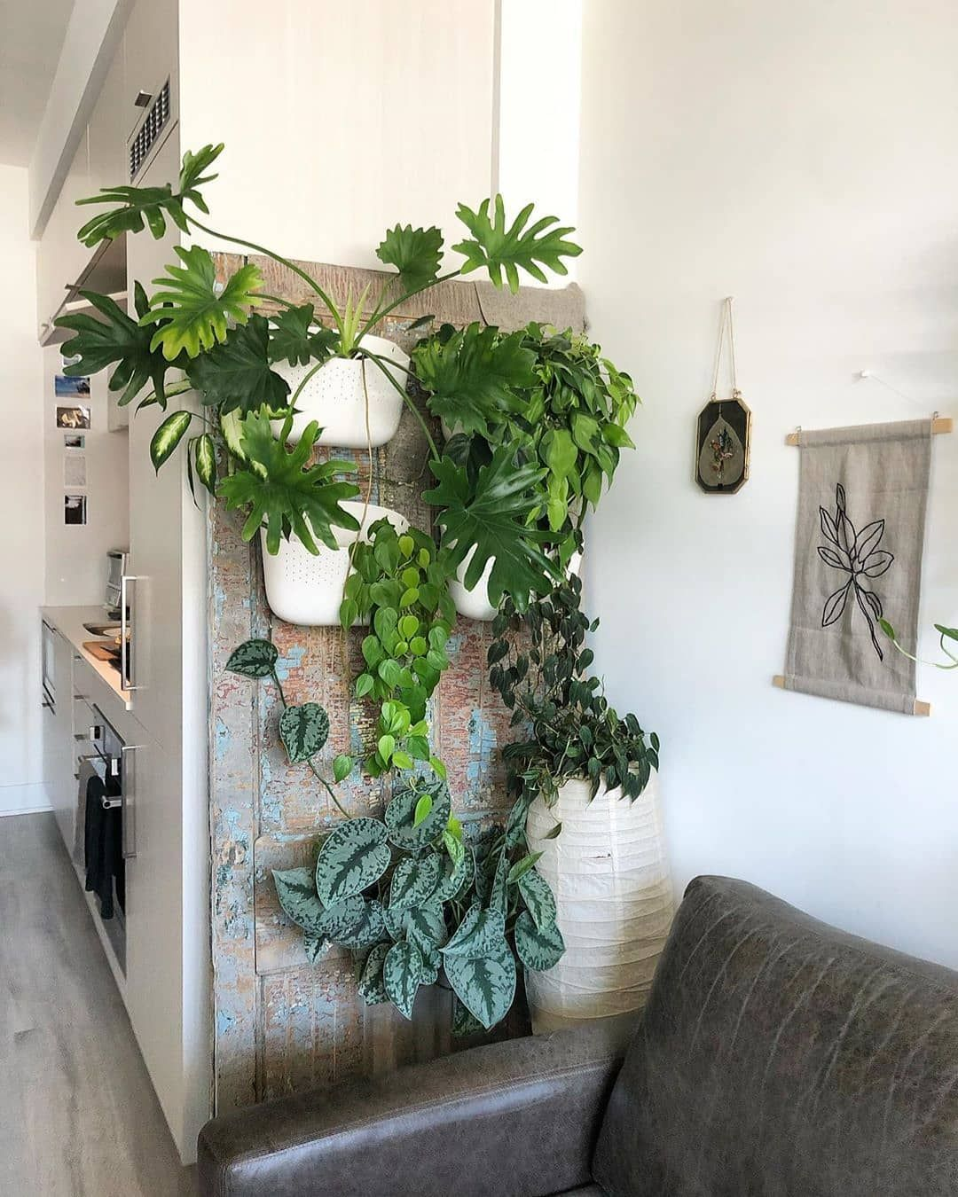 Olivra Homedecor On Instagram Beautiful Houseplant Family Picture Tag A Friend Who Needs A Houseplant Corner Like This In Th Plant Wall Plants House Plants Inspire me home decor living room gif