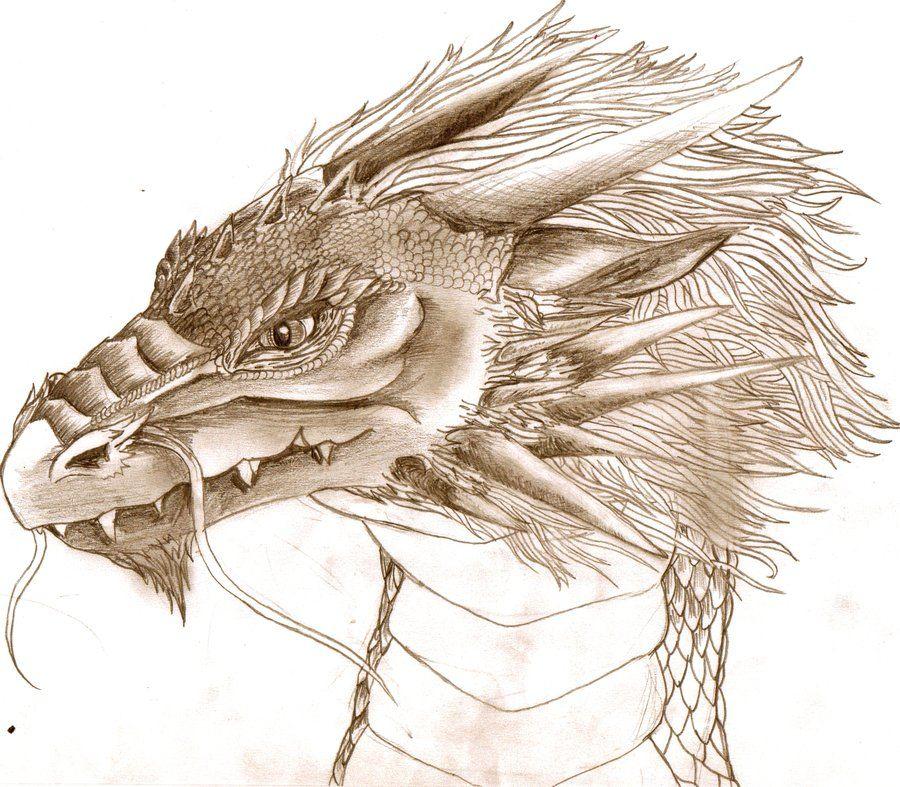 dragon head tattoo drawings