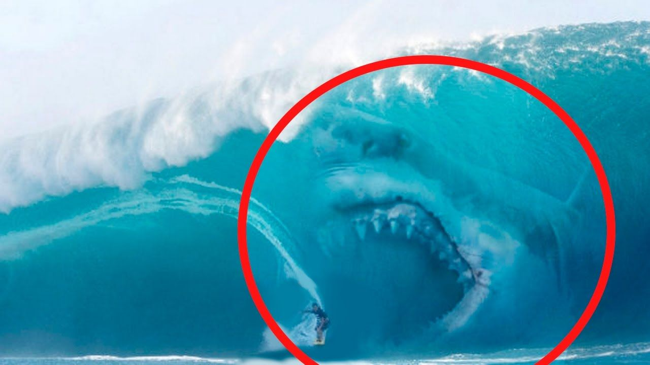 5 Megalodons Caught On Camera Spotted In Real Life Shark Pictures Sharks Scary Big Shark