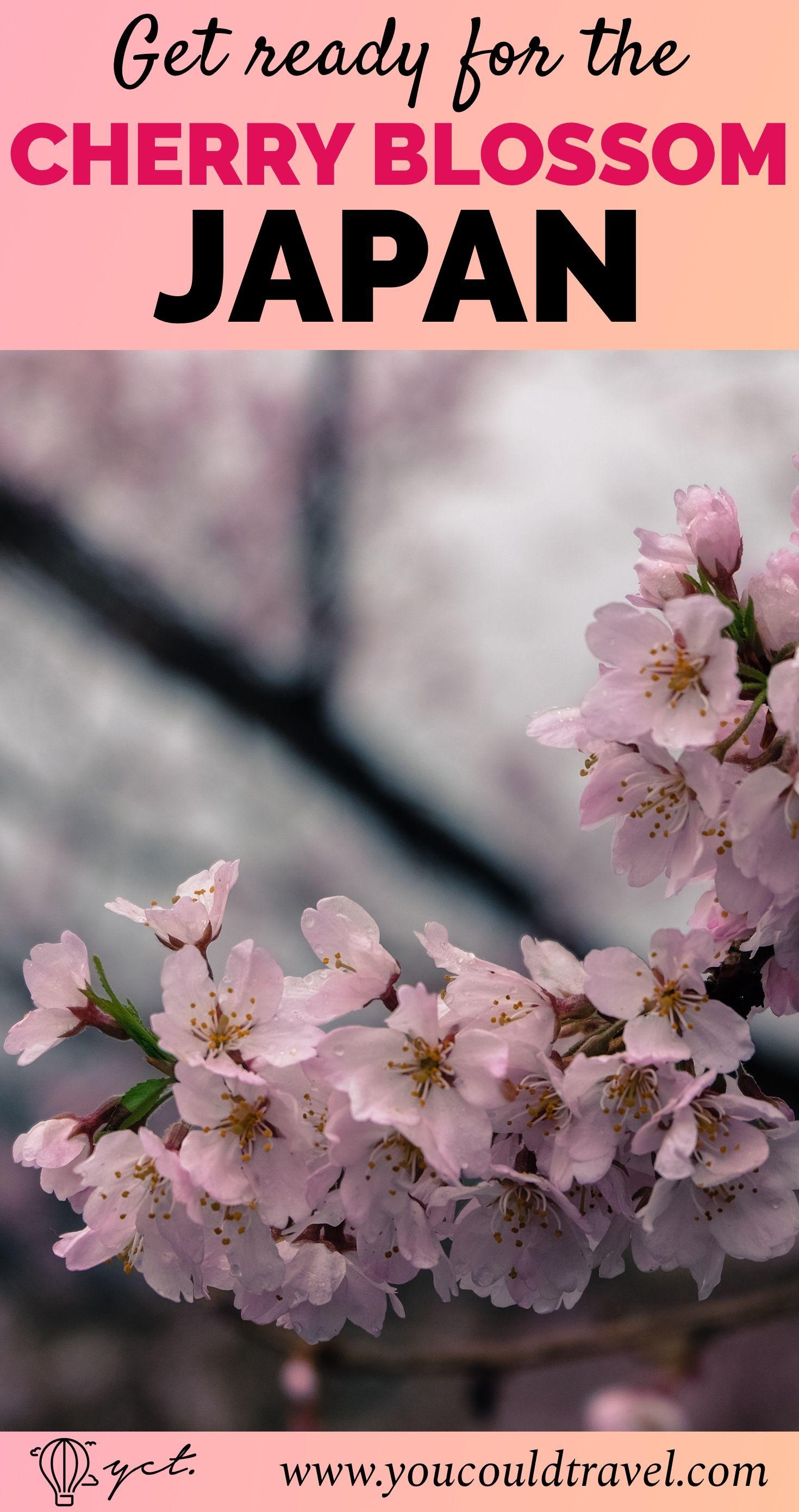 Japan 2020 Cherry Blossom Festival Updated Dates Japan Cherry Blossom Japan Cherry Blossom