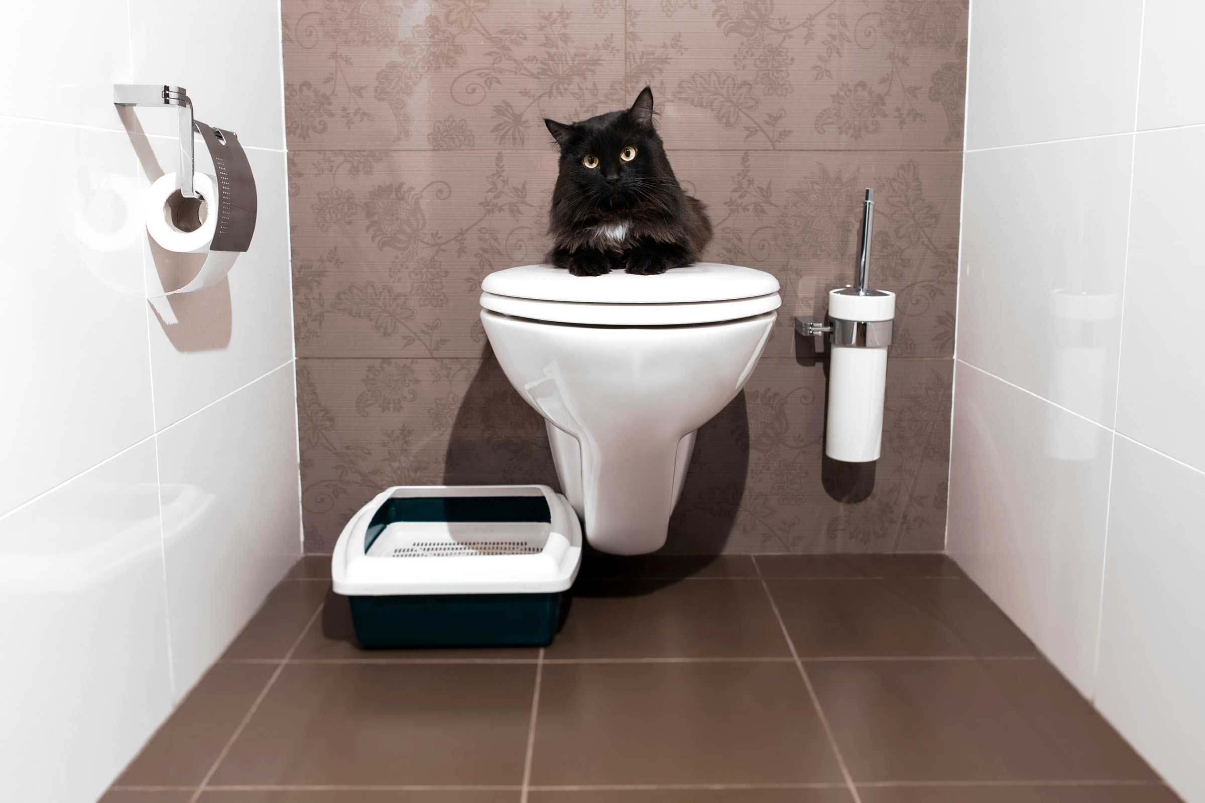 Here S How To Train A Cat To Do 5 Life Changing Things Cat Urine Cat Training Cat Pee