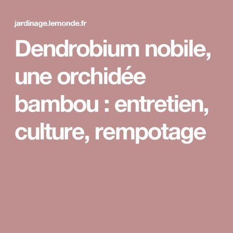 dendrobium nobile une orchid e bambou entretien culture rempotage plante pinterest. Black Bedroom Furniture Sets. Home Design Ideas
