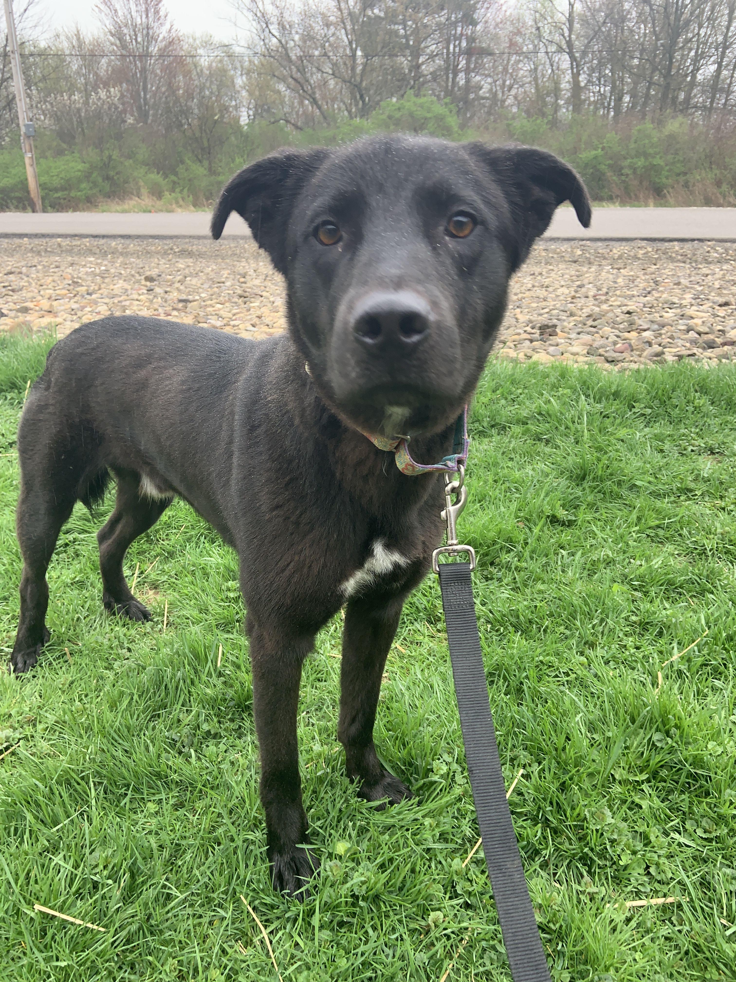Adopt Theo On Black Dog Syndrome Pet Adoption Animals