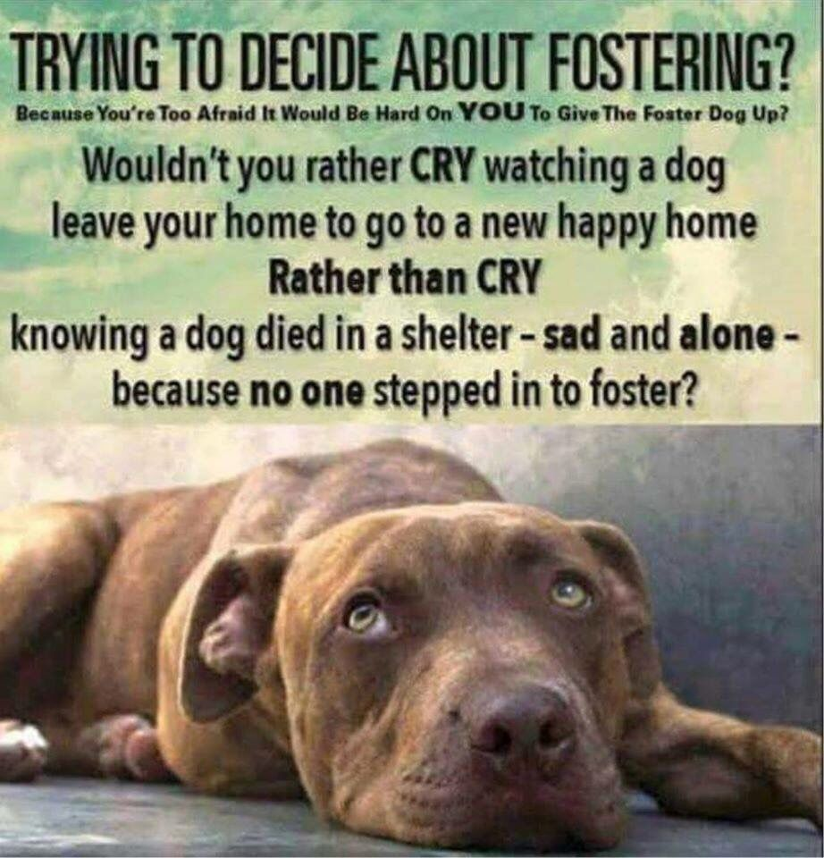 Only Takes One Foster To Save Many Lives Please Consider Being