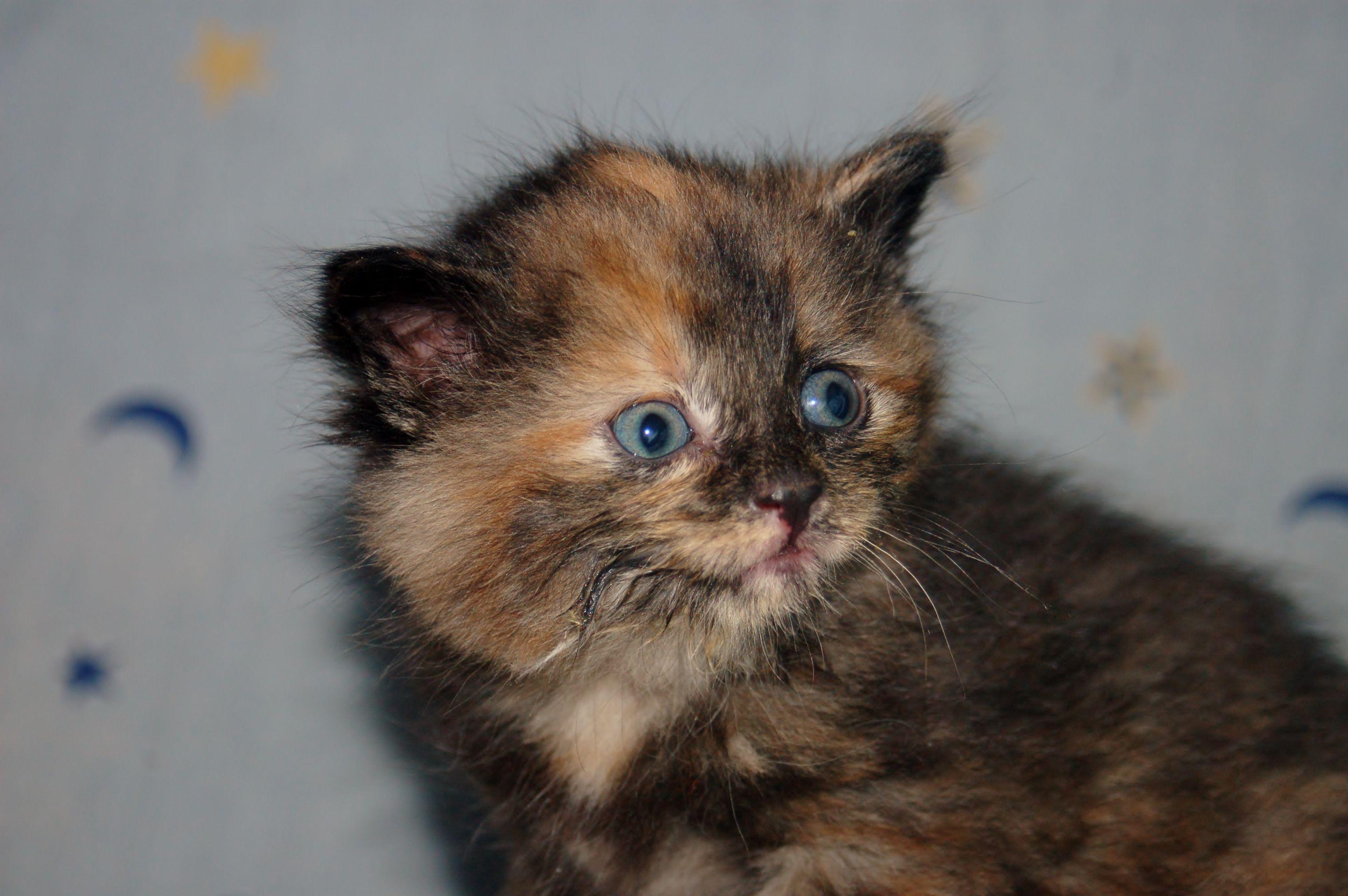 Adopt A Cat Today Cat Adoption Cat Today Animals