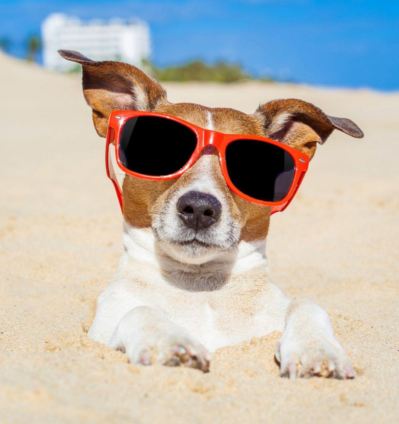 Pet Friendly Accommodations Restaurants More Jack Russell Dog Friends Dog Beach