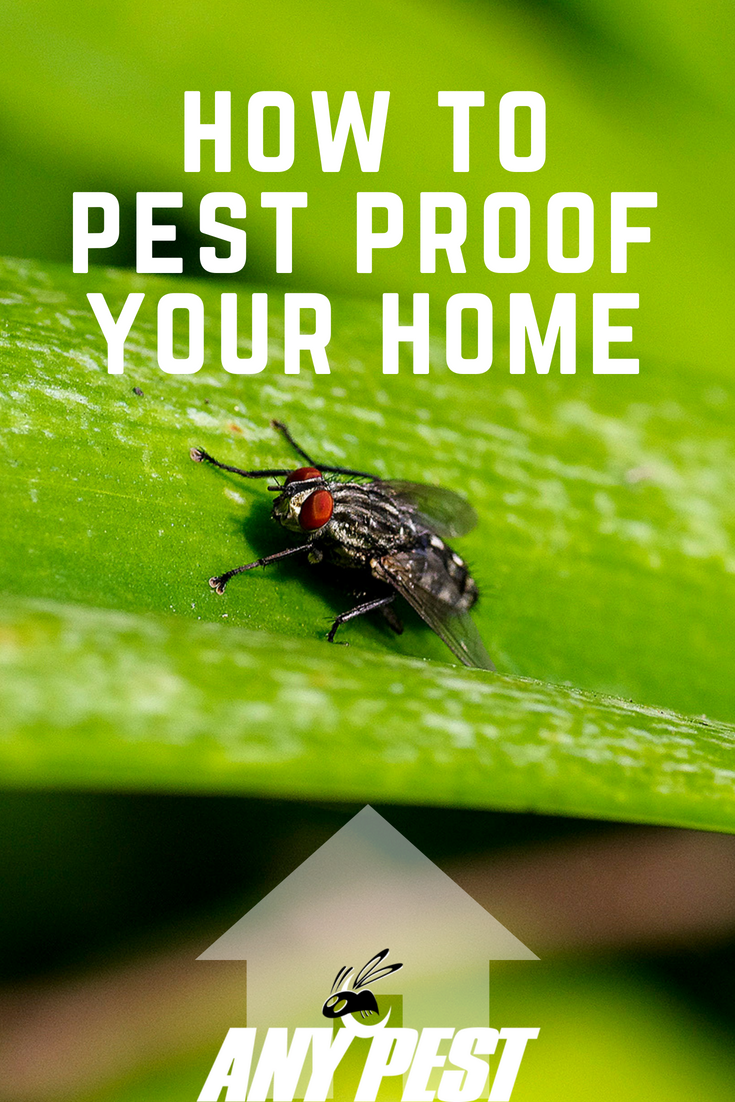 Check out how to pest proof your home here! Pest control