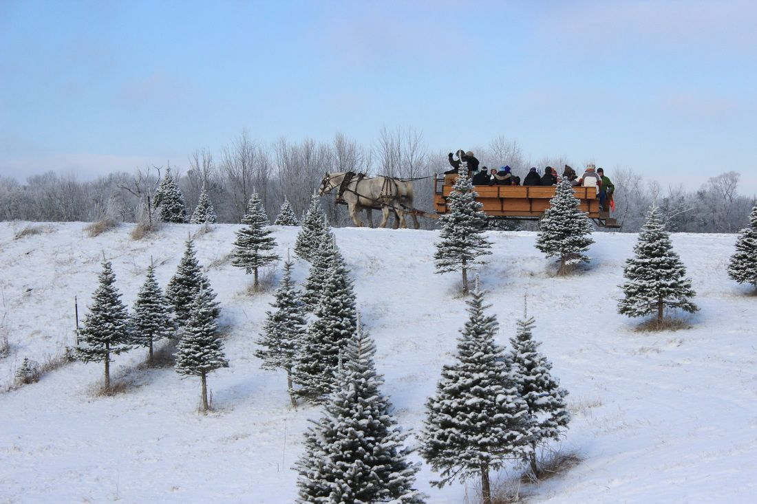 Start A Tradition At These Michigan Christmas Tree Farms Michigan Christmas Farmhouse Christmas Tree Christmas Tree Farm