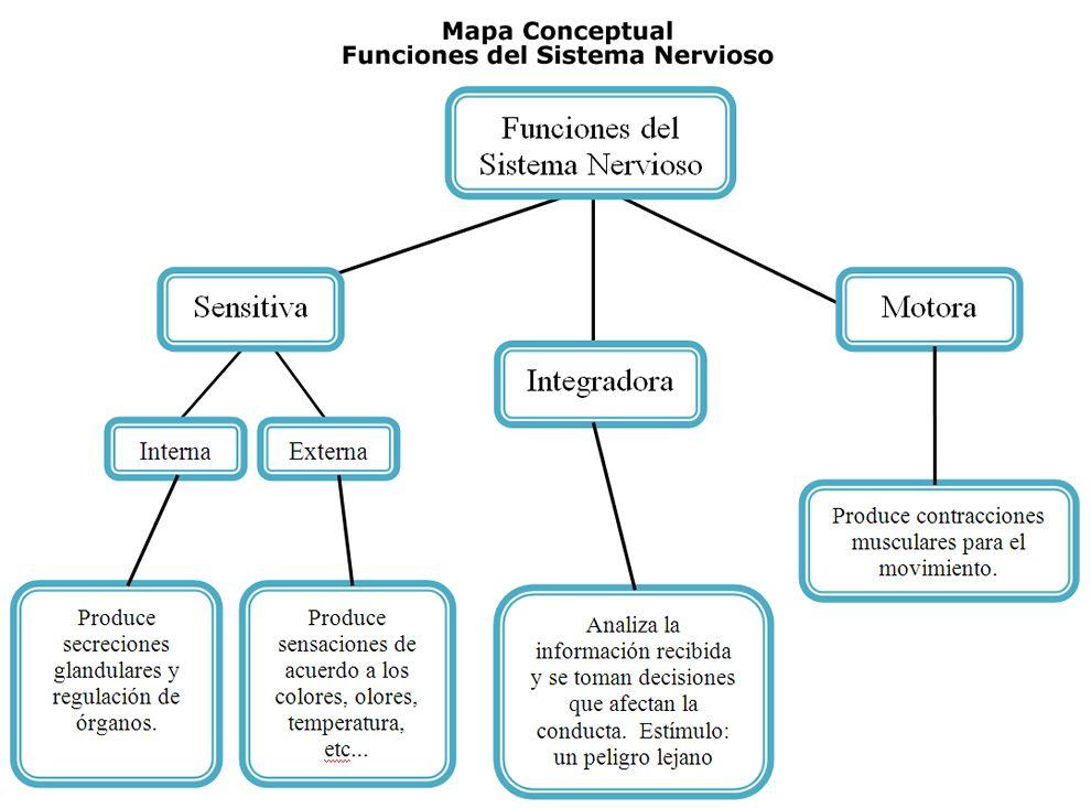 Esquema Del Mapa Conceptual | Sistema Nervioso | Pinterest | Sistema ...