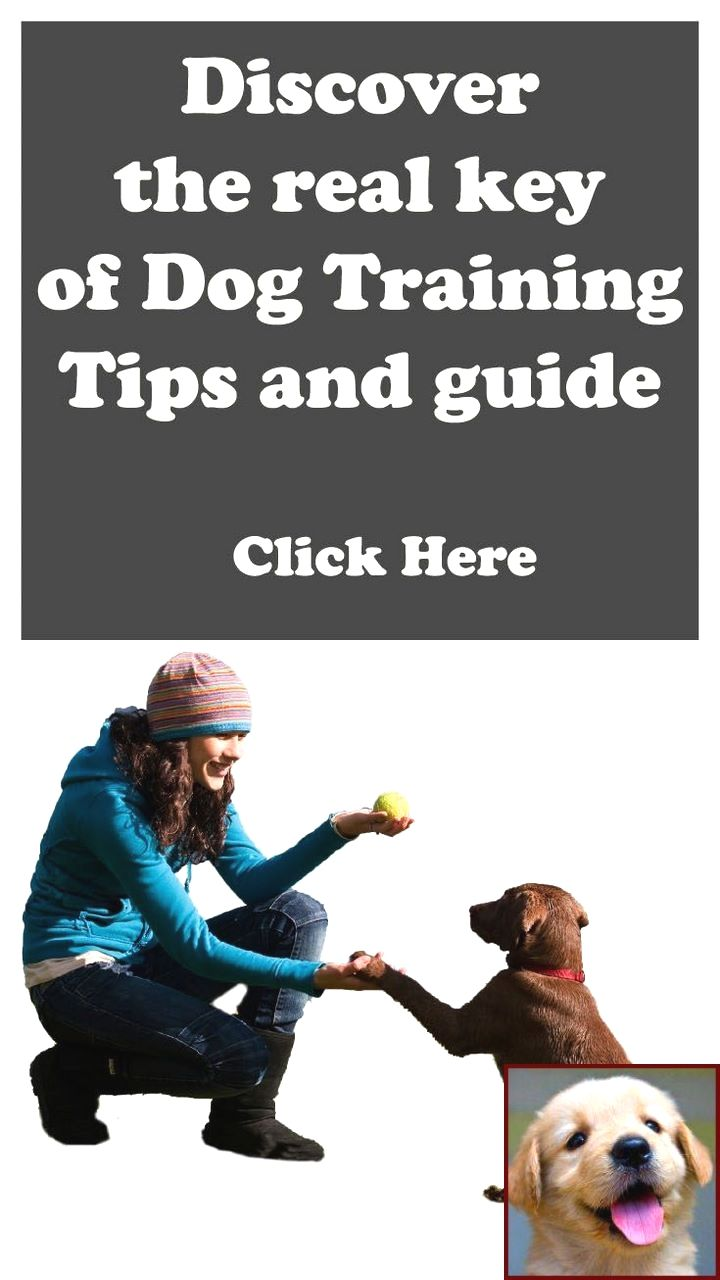how to discipline a dog for snapping