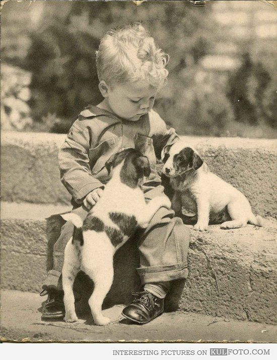 Picture Of A Family With Two Kids And Two Dogs