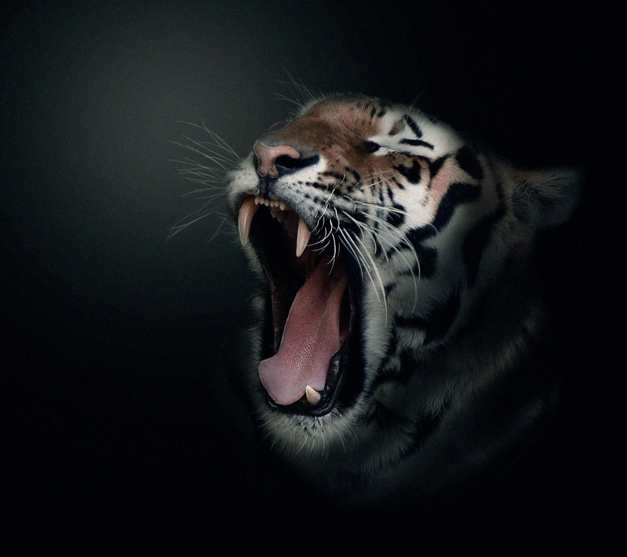 Tiger desktop background wallpaper free tigers pinterest tiger desktop background wallpaper free thecheapjerseys Image collections