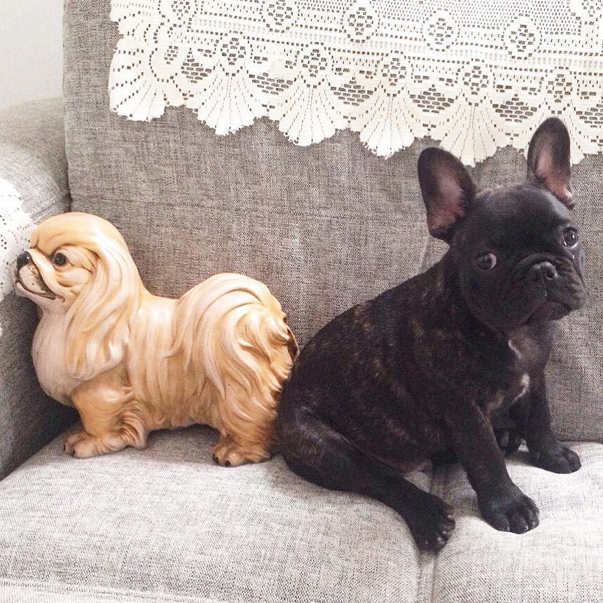 Butt to butt with Bae #throwbackthursday #tbt #pet #frenchbulldog #dog #frenchie #frenchies_ #frenchbulldogsofinstagram #frenchbulldoglovers #frenchielove #frenchielife #dailyfrenchie #dailypuppy...