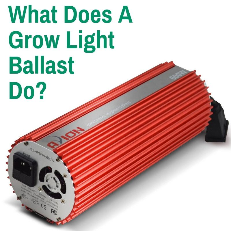 What Does A Grow Light Ballast Do Grow Lights Ballast Led Grow Lights