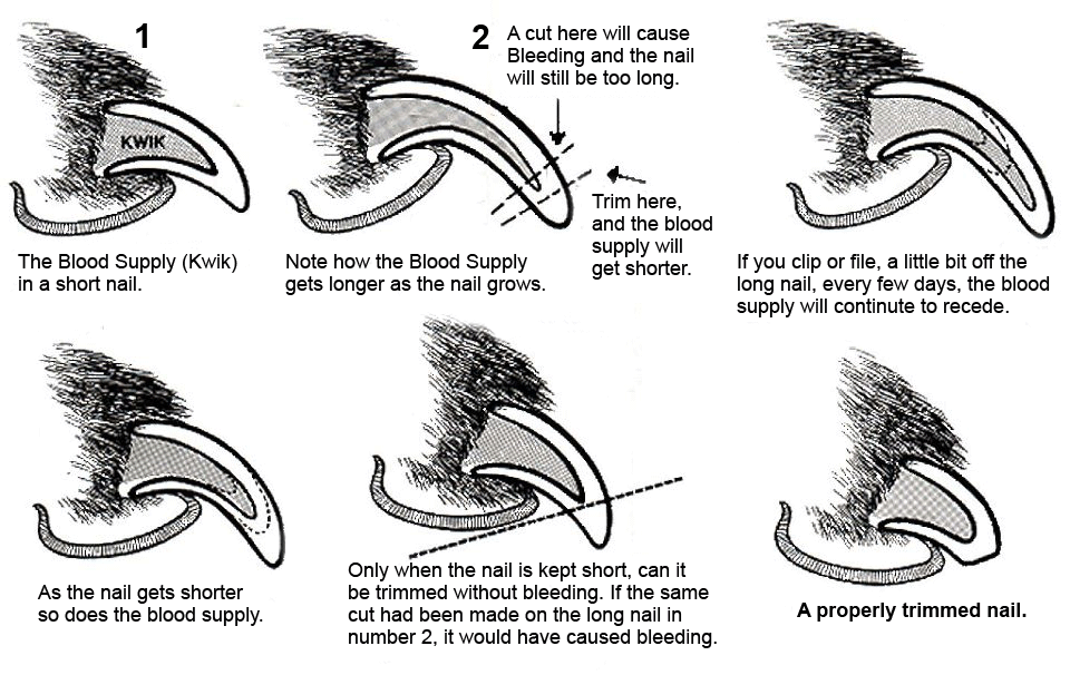 Clear Diagram of why and how to trim dog nails