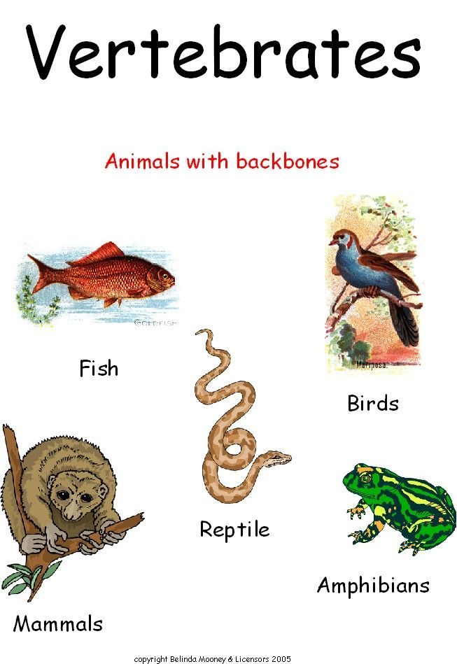 Invertebrate Worksheet. Animals without spines | AHG Badge ...