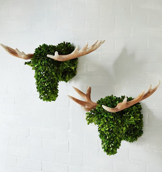 boxwood animal heads http://rstyle.me/n/szi3mr9te