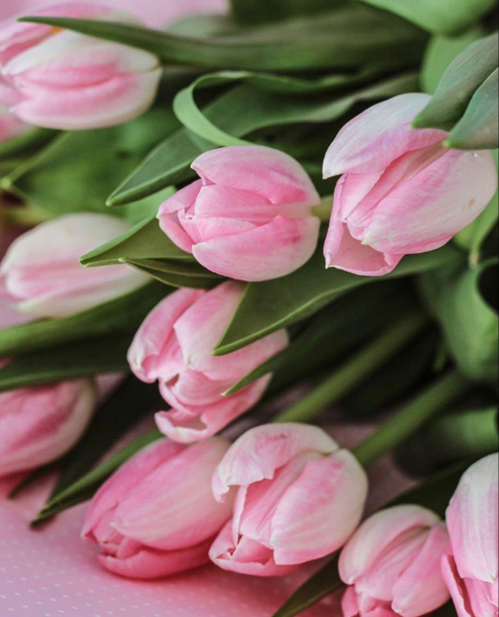 Pink Tulips In 2020 Wedding Flowers Tulips Pink Tulips Flowers