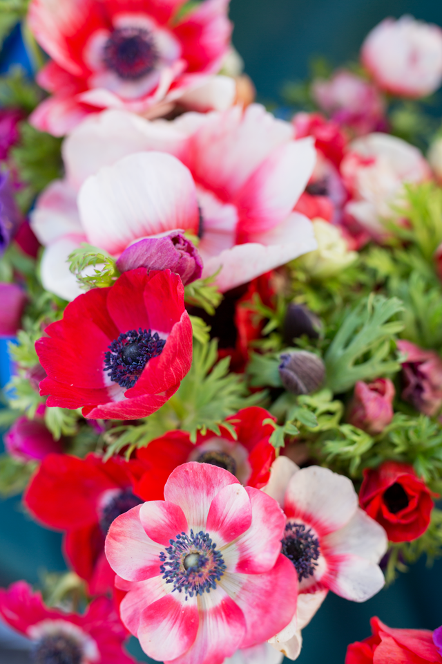 Marshalls Abroad Flowers Image Photography Beautiful Photography