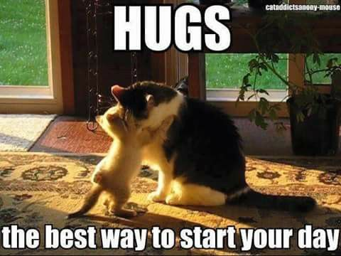 Funny Mother S Day Meme : Hugs are the best way to start your day animals pinterest hug