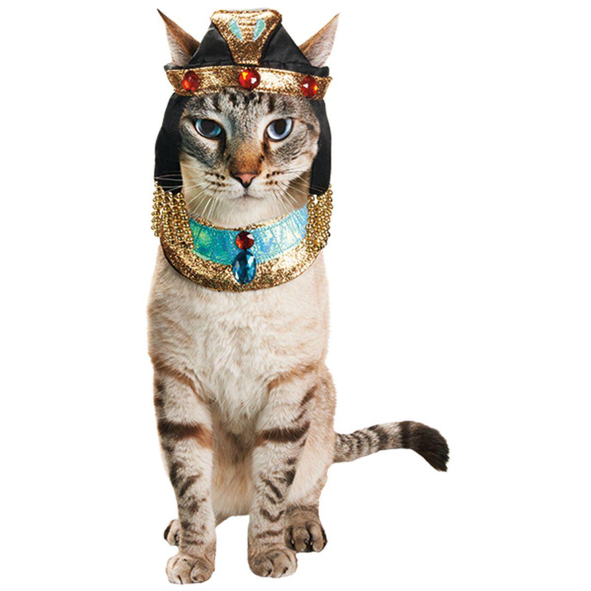 Petco Cleocatra Halloween Cat Costume With Images Cat Costumes Petco Cat Pet Halloween Costumes