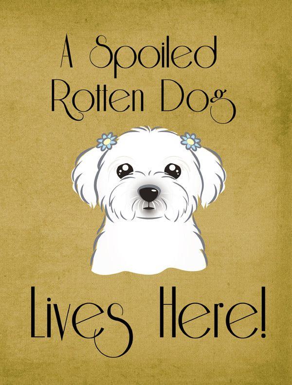 Spoiled Dog Lives Here 2 Sided Garden Flag Maltese Dogs Dogs