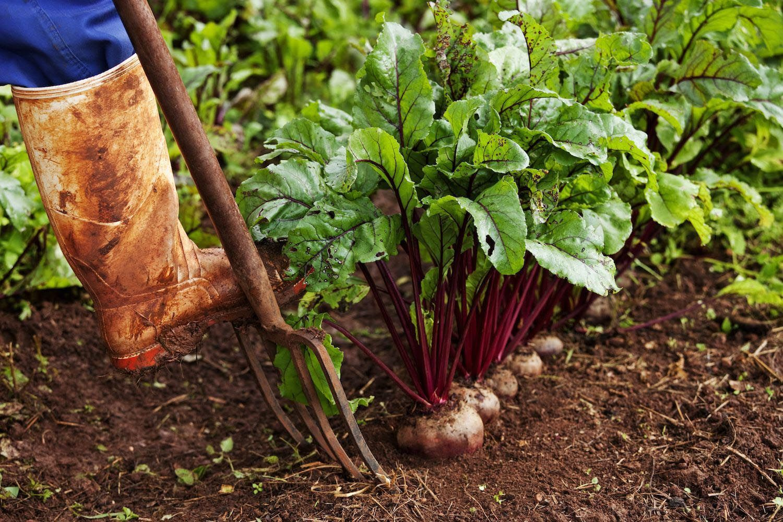 High Yield Vegetables Small Gardens Garden Design Ideas 400 x 300