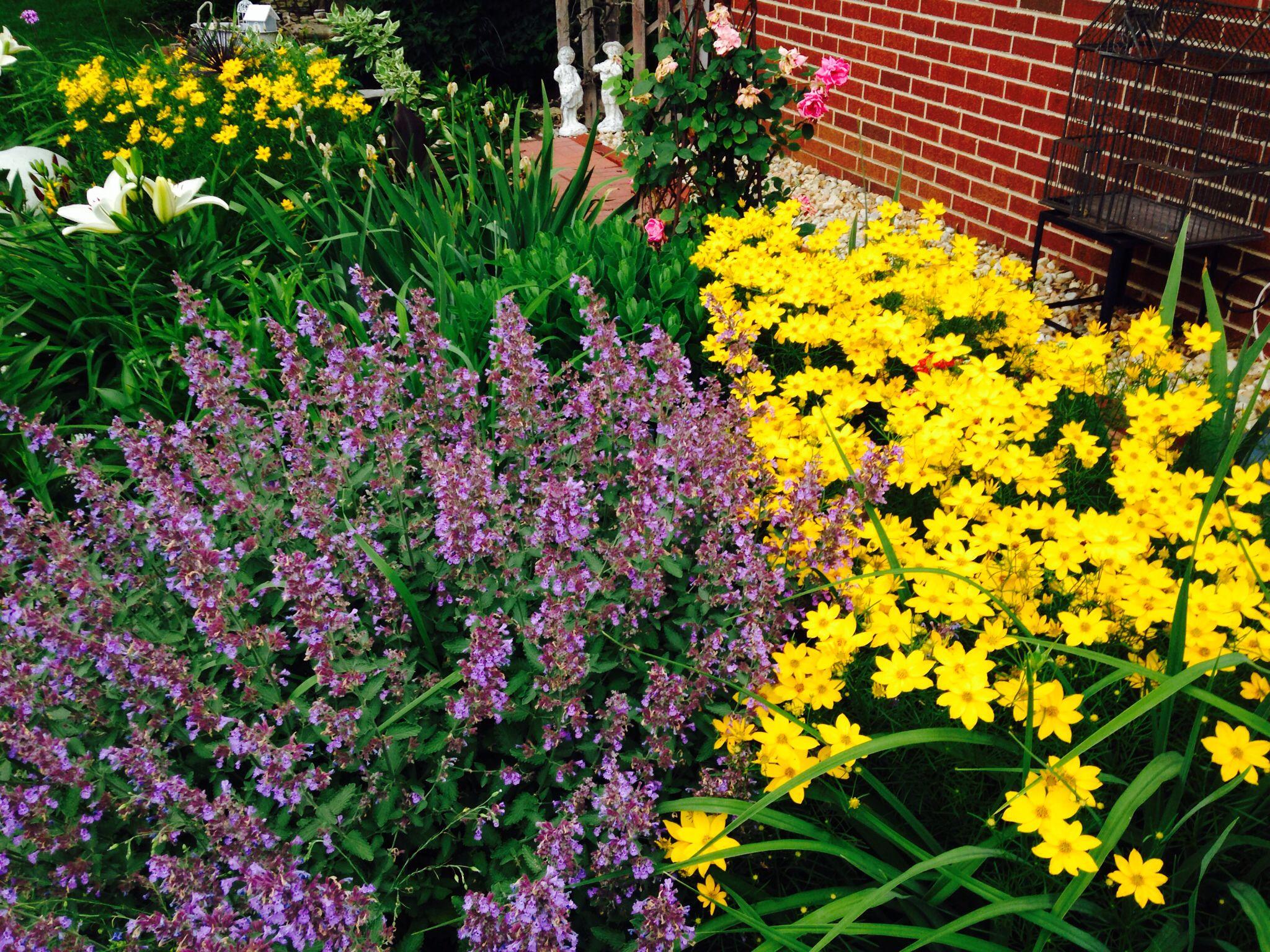Flower Garden Ideas Illinois perfect flower garden ideas illinois guide to perennial placement