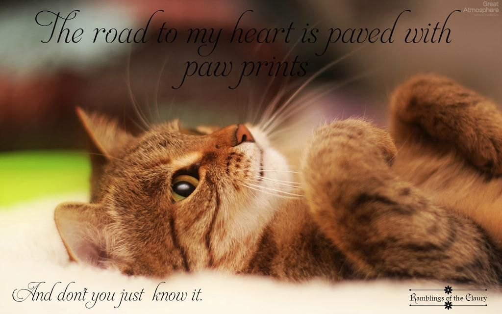 The road to my heart is paved with paw prints #cats #love #heart