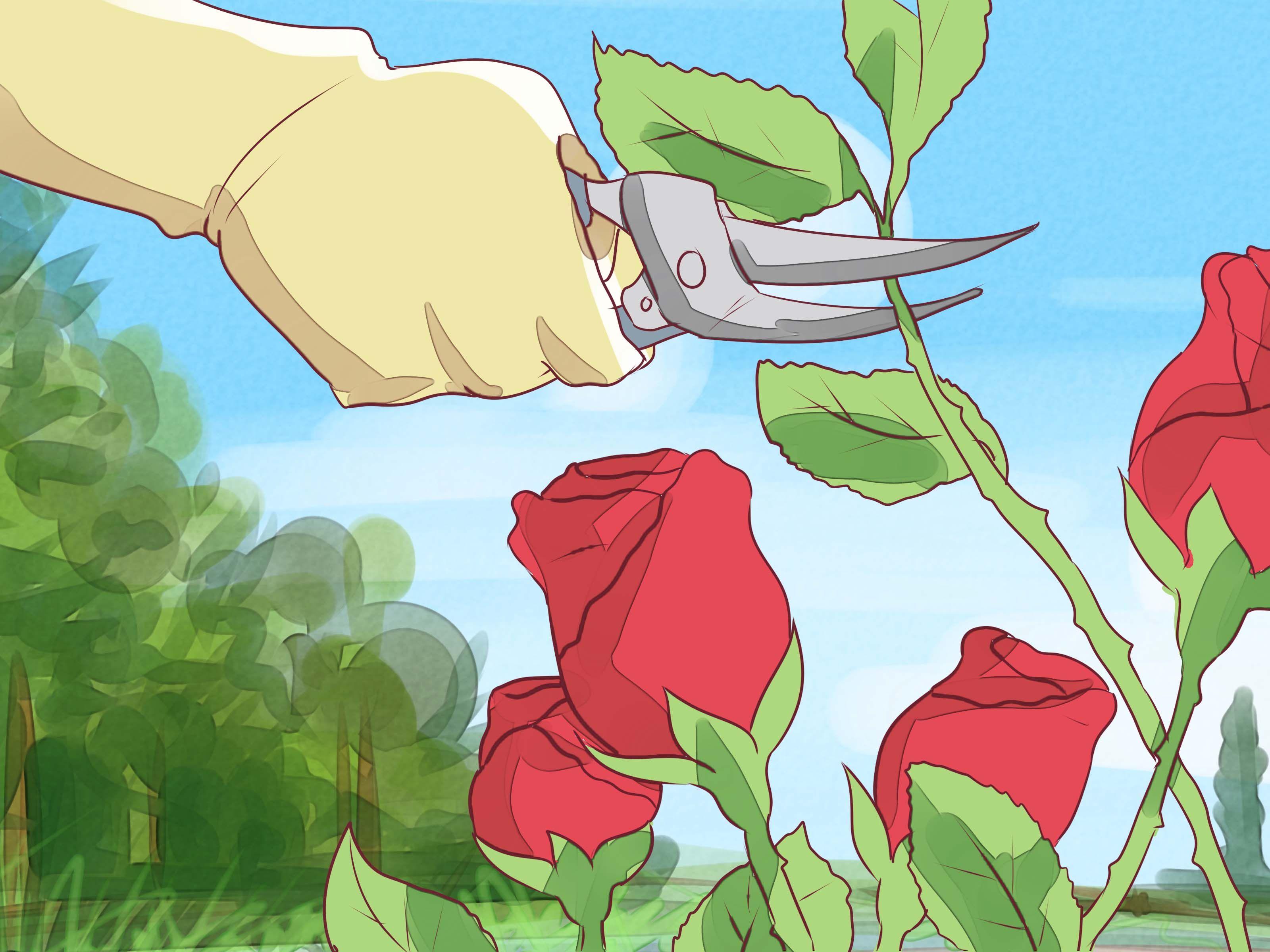 Prune knockout roses gardening pinterest knockout roses