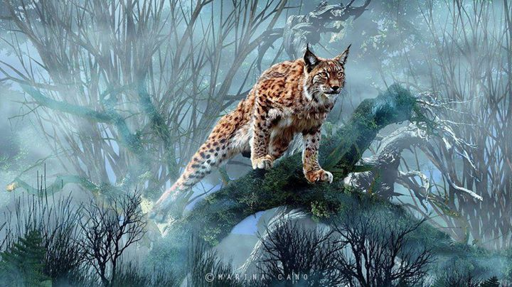 9 best Incredible and Award Winning National Geographic Animal ...