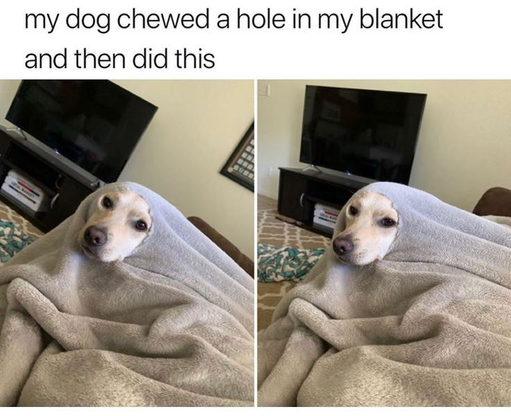 Pin By Oracionseis25 On Pet Memes In 2021 Funny Animal Jokes Cute Animal Memes Funny Animal Pictures