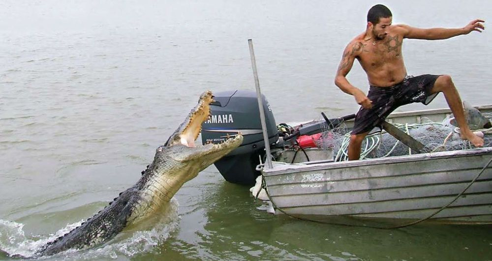 Saltwater crocodile harassing a man in a small fishing for Little fishing boats