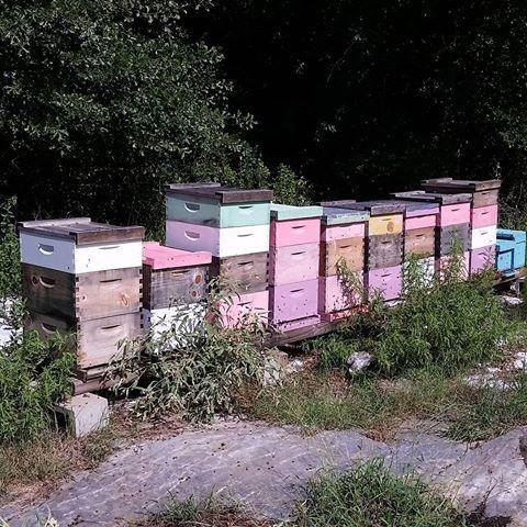 Verdant Tree Farm Honey Bees Verdant S Honey Bees Honey Bee Yard