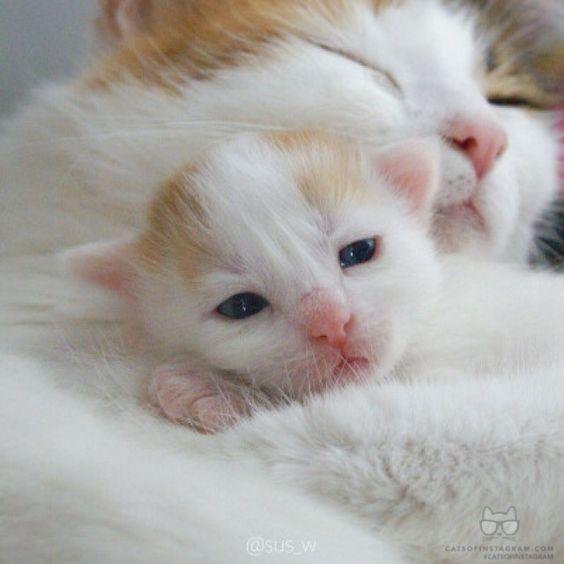 صور قطط باقة مختارة من أروع و أجمل القطط مع خلفيات Hd Cute Animals Baby Cats Cute Baby Animals