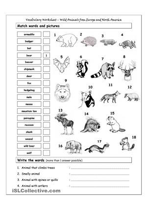 vocabulary matching worksheet wild animals from europe north am english ingles ni os. Black Bedroom Furniture Sets. Home Design Ideas