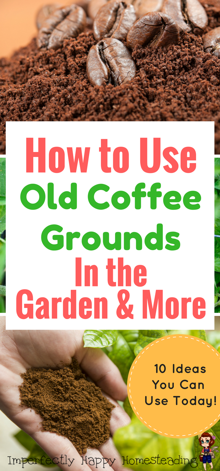 How to use old coffee grounds in the garden more great for gardeners homesteaders and coffee for How to use coffee grounds in garden