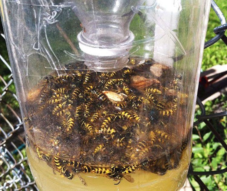 d2912a83ef4bba54e998a748ed65f4ba - How To Get Rid Of Wasp Nest In Roof Tiles