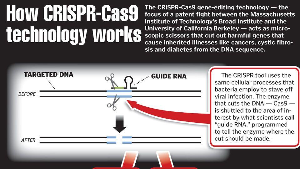 How Crispr Cas9 Technology Works Technology Massachusetts Institute Of Technology University Of California Berkeley