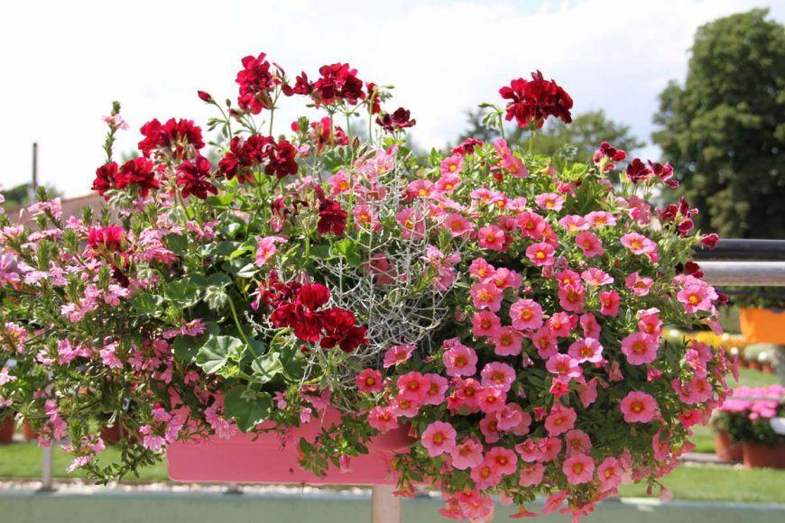 Inspiration für Deinen Balkonkasten - Plant Happy