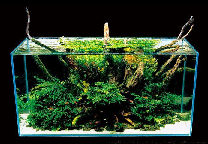 How To Paint The Background Of Your Fish Tank Black Nature Aquarium Aquarium Backgrounds Aquascape Aquarium