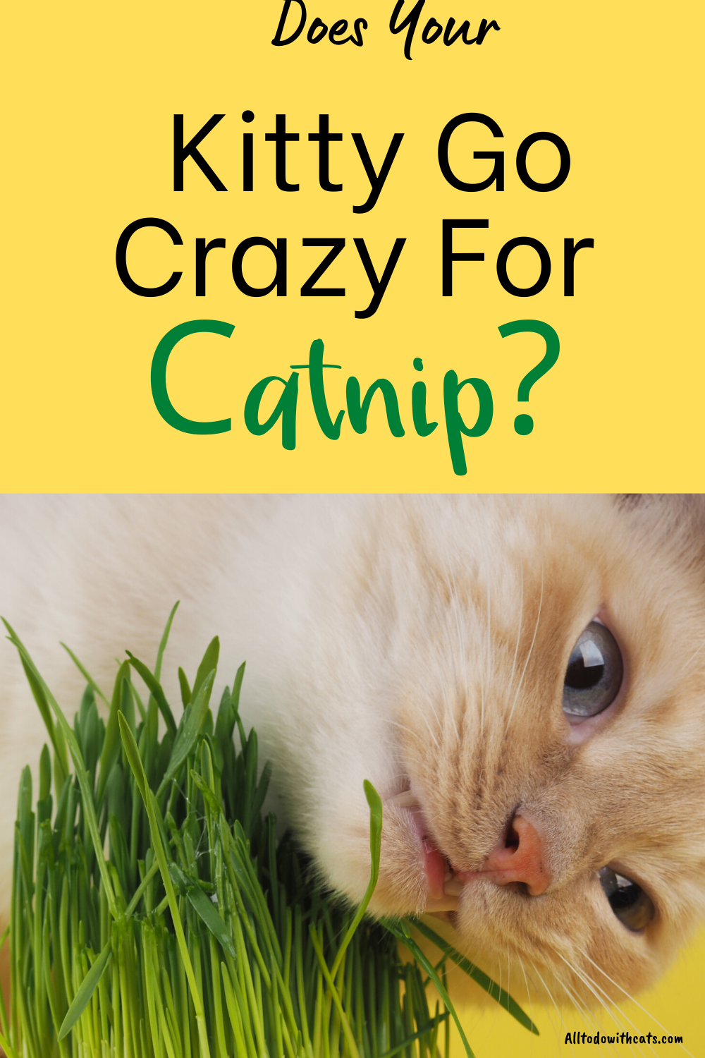 How Does Catnip Affect Cats And Is It Safe For Them To Eat Catnip Cat Care Tips Cat Care