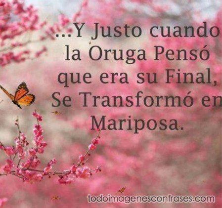 Imagenes De Mariposas Hermosas Con Frases Buscar Con