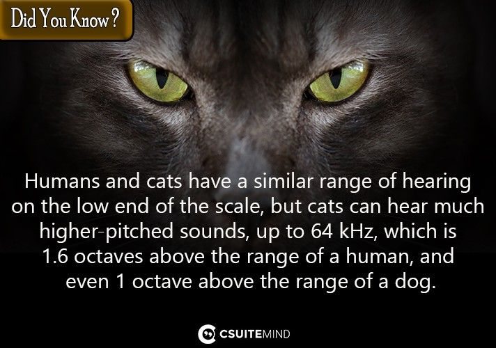Humans and cats have a similar range of hearing on the low end of the scale, but cats can hear much higher-pitched sounds, up to 64 kHz, which is 1.6 octaves above the range of a human, and even 1 octave above the range of a dog.